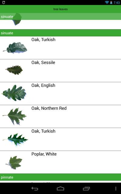 tree-app-leaves