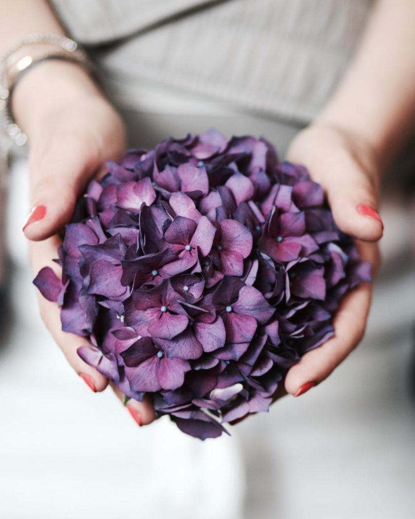 Gerade diese wunderschne Hortensie am Markt gekauft HAPPY WEEKEND hortensiehellip